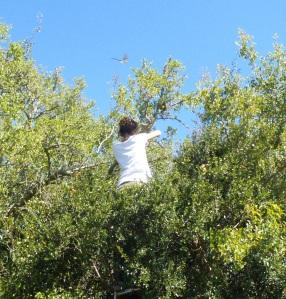 Pamela chequeando nido de tijereta